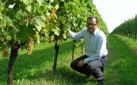 Vinsmaking - Økologisk fra Soave