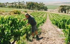 Viner fra Sør-Afrika