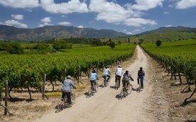 På vinloffen i Sør-Amerika